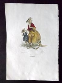Grandville 1842 Antique Hand Col Print. Kangaroo mum with Young